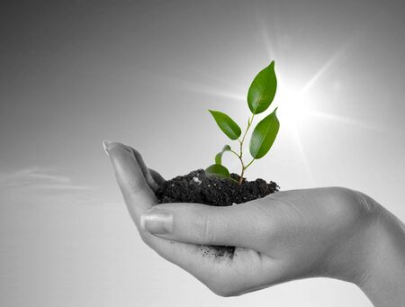 enviroment: Hand with a plant on a background of the blue sky. Black-and-white background and green plant
