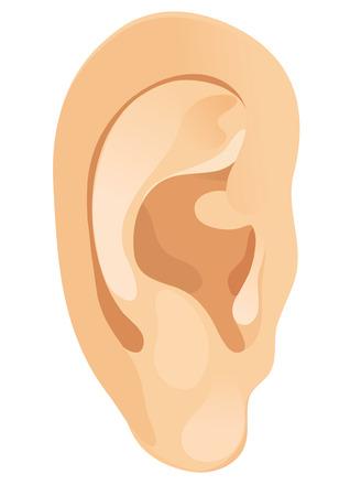 couleur de peau: L'oreille humaine. Vector illustration