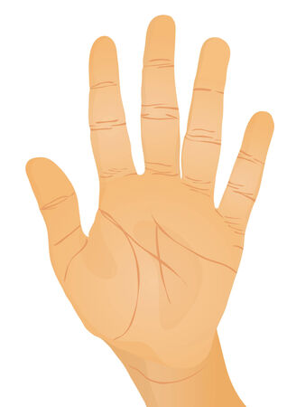 caucasian: Hand gesture - palm. Vector illustration Illustration