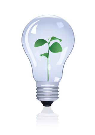 Plant in lamp. Vector illustration Vector