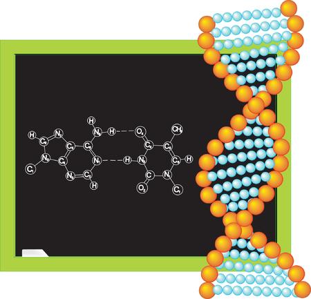 biologia molecular: Pizarra con f�rmula qu�mica. ADN. Ilustraci�n vectorial