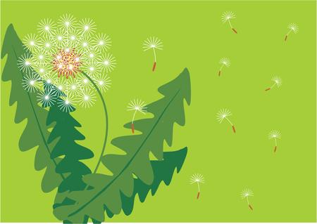 backgroud: Backgroud with flower Illustration