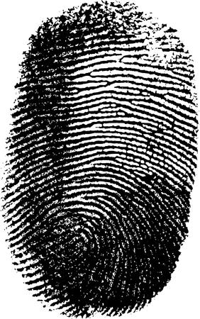 fingerprinted: Vector fingerprint on white background