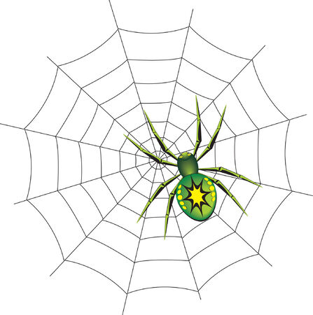 poisonous insect: Spider on a web. Vector illustration Illustration