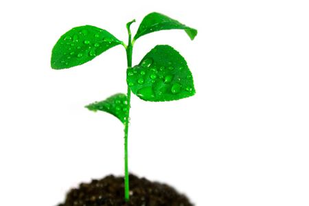 Plant in soil on white background Stock Photo - 3870629