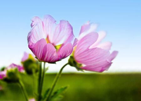 Purple flower and blue sky