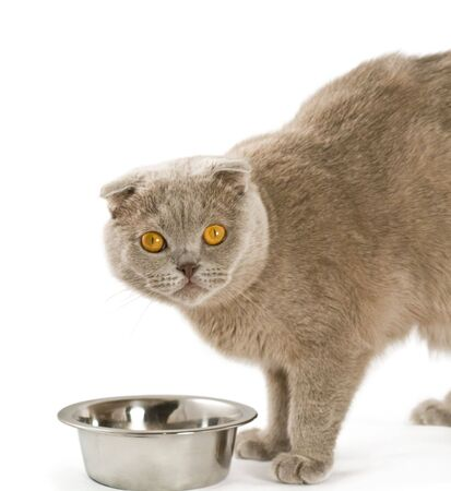 Cat eats from a bowl. Isolated on white background photo