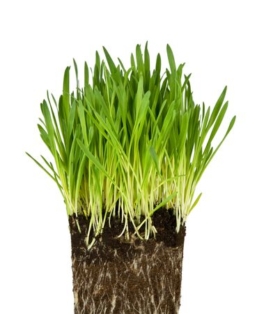 Green grass and roots isolated on white background Stock Photo - 3990453