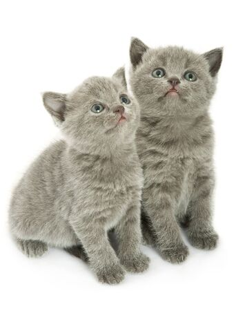 Twee kleine grappige kittens. Geïsoleerd op witte achtergrond