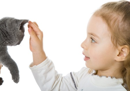 Young girl with kitten. Isolated on white background Stock Photo - 4251310