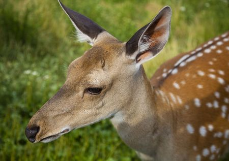 The small deer on nature green background Stock Photo - 5339160