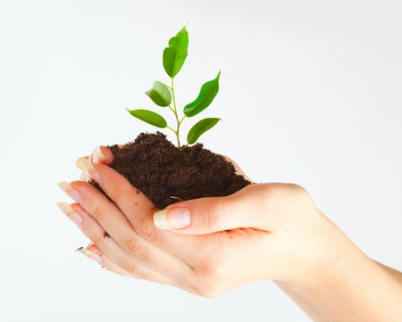 earth handful: Plant in two hands on gray background Stock Photo