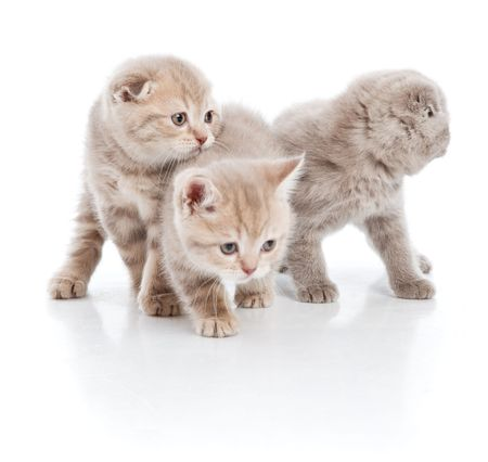 bawl: Three small funny kittens. Isolated on white background Stock Photo