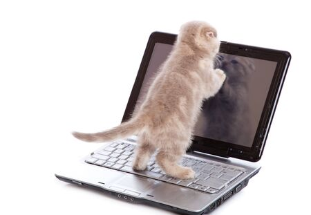 Small funny Kitten on laptop. Isolated on white background photo