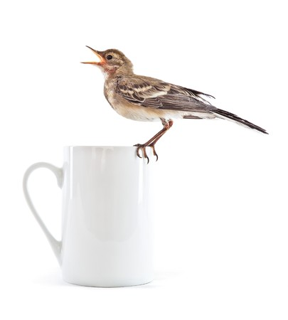 Nestling of bird (wagtail) on cup. Isolated on white photo