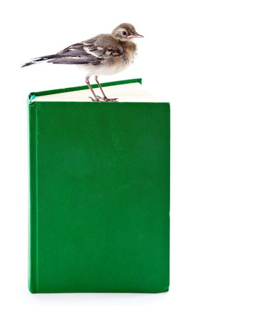 Nestling of bird (wagtail) on book. Isolated on white photo