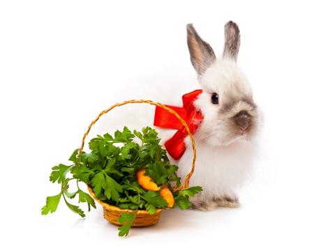 White rabbit in basket. Isolated on white background photo