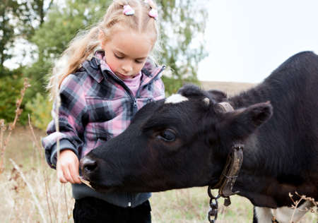 young cow: a little girl feeds the cow Stock Photo