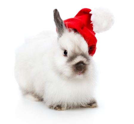 a funny rabbit in a christmas cap. isolated on a white background photo