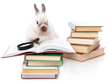 cute rabbit: un lindo conejo est� leyendo un libro con una lupa. aislado en un fondo blanco Foto de archivo
