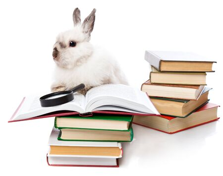 tame: a cute rabbit is reading a book with a loupe. isolated on a white background