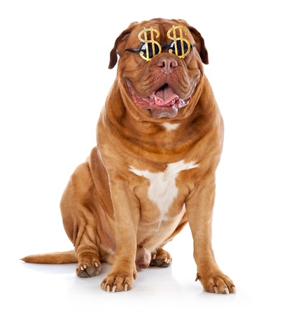 the dog in the funny glasses is sitting. isolated on a white background photo