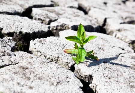 land met droge gebarsten grond