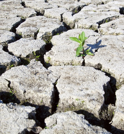 infertile:  land with dry cracked ground