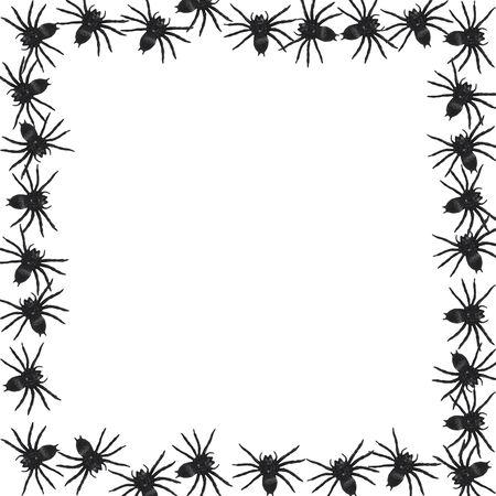 samhain: frontera de ara�a aislado sobre fondo blanco