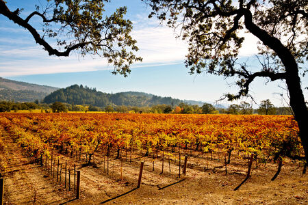 napa valley: Napa Valley Vineyards in Autumn Stock Photo