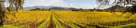 Napa Valley in Autumn Panoramic Banco de Imagens