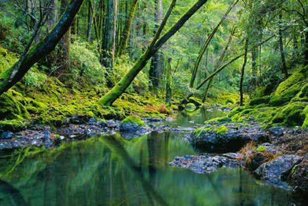 Tropical Forest Banco de Imagens