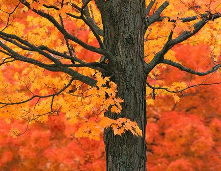 New England Autumn Color Banco de Imagens