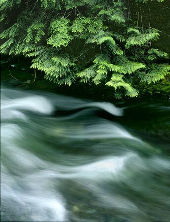 rushing water: Soft Flowing Rushing Water in River