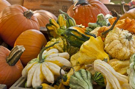 Fall Autumn Pumpkins and Squash