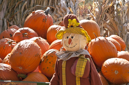 Fall and Halloween Pumpkins and Scarecrow