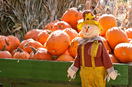 Fall and Halloween Pumpkins and Scarecrow photo