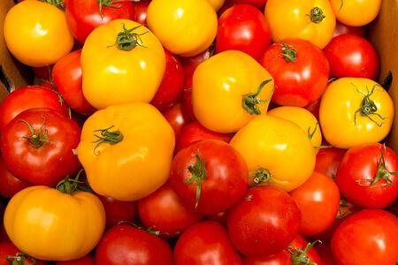 Farm Fresh Organic Tomatoes