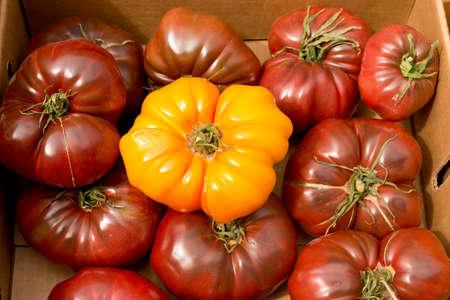 Farm Fresh Organic Heirloom Tomatoes  Banco de Imagens