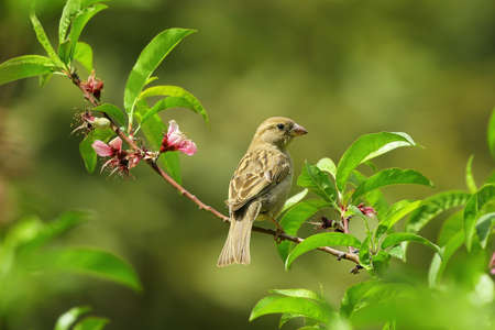 A bird sitting on a stem with green background Standard-Bild