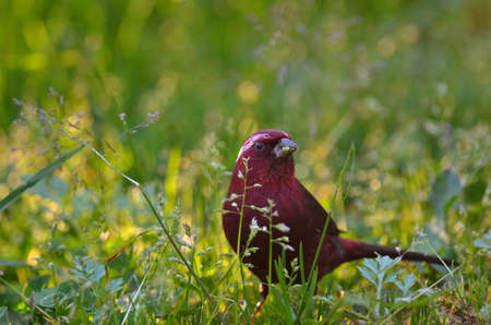 a bird on a field with some flower