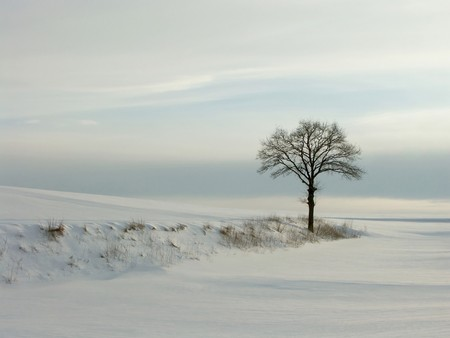 Lonely winter tree in the light of the setting sun. Stock Photo - 4325004