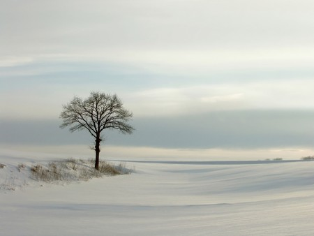 Lonely winter tree in the light of the setting sun. photo