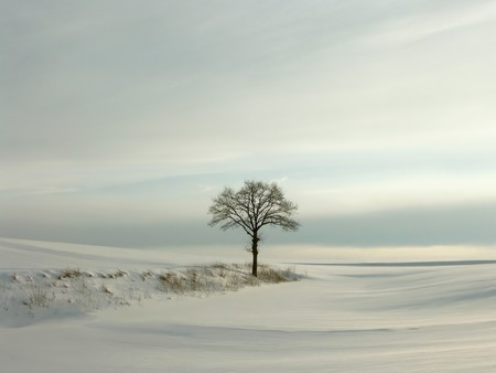 cloudless: Lonely winter tree at sunset, fresh snow covered the field.