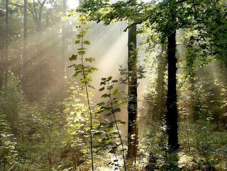 bosque en oto�o con los rayos de luz que el camino a trav�s de los �rboles Foto de archivo