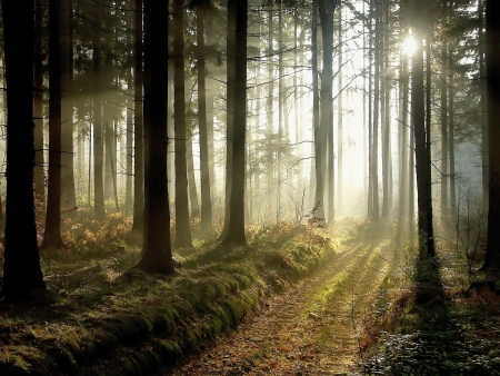 road and path through: forest in autumn with the rays of light making the way through the trees