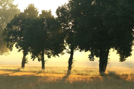 Trees in the countryside lit by the morning sun on a misty summer day