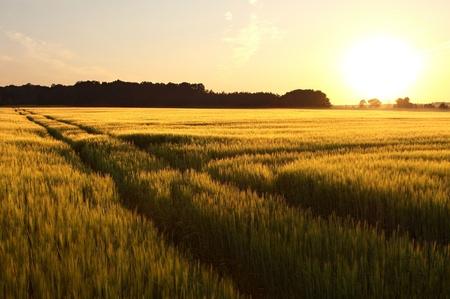 Puesta de sol sobre el campo con un camino de tierra en el bosque
