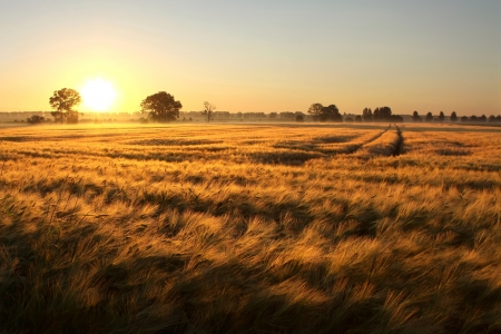 Sunrise over the fields of grain on the first day of summer Stock Photo