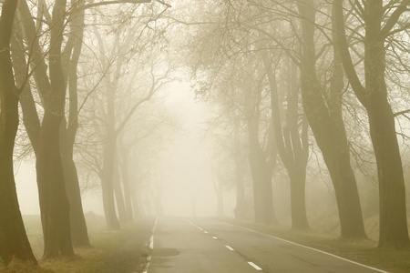 Country road among the trees surrounded by the morning mist photo